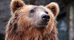Medvével birkózott a részeg lengyel az állatkertben – videó