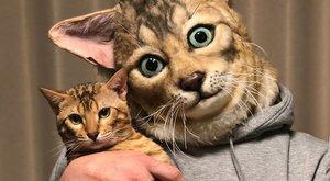 Az internet sztárja lett ez a skót lógófülű macska