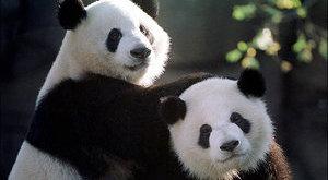 5 bizarr szexszokás az állatvilágból