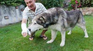 Németh Lajos kibékült a kutyájával