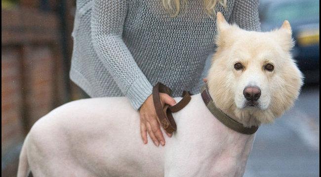 Depressziós lett a kicsúfolt kutya - fotó