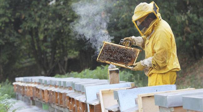 A magyarok ellenzik, az EU mégis megvédi a méheket