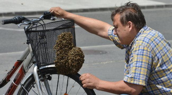 Durva: méhraj költözött a bringába