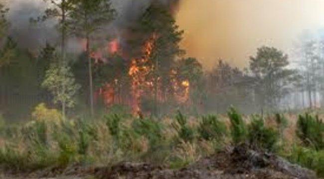 Lángol az erdő Somogyban