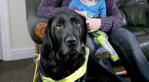 Kutya mentette meg a biztos haláltól a kisbabát