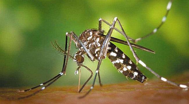 Gyilkos kór: majdnem ölt Tiszaföldváron egy szúnyogcsípés