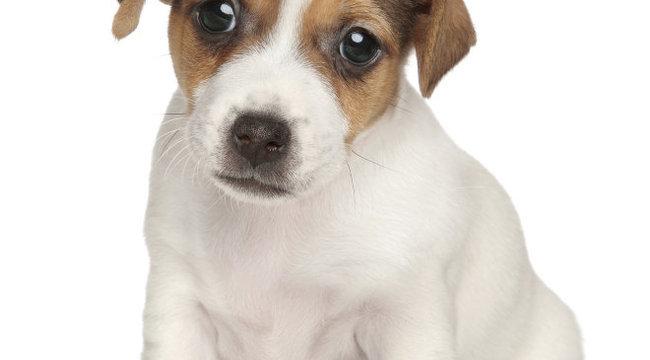 Adjon menedéket kutyájának szilveszterkor
