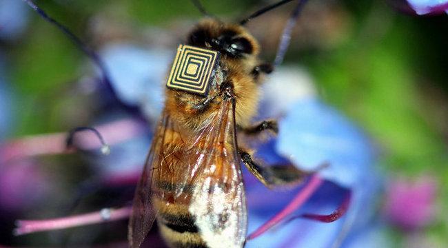 Jeladókkal követik a méheket