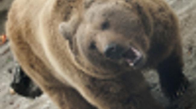 Medve tartja rettegésben a bükki falut