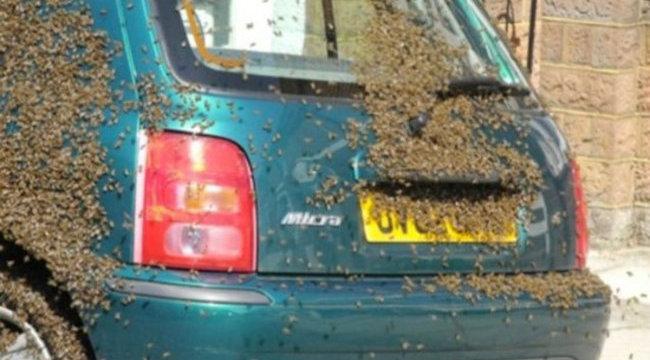 20 ezer méh támadott meg egy autót