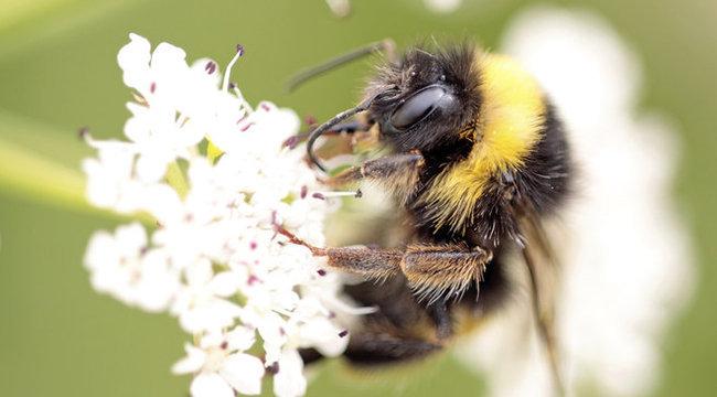 Hihetetlen: térképpel jutnak haza a méhek