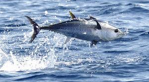 Hoppá: mesebeli lényre bukkantak a halászok