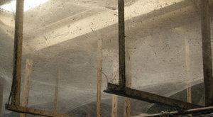 Rémisztő: 100 millió pók lakta az óriáshálót