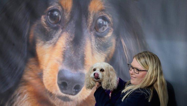 Kutyakiállítás Nagy-Britanniában