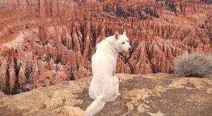 Napi cuki: világjáró lett a menhelyes kutya