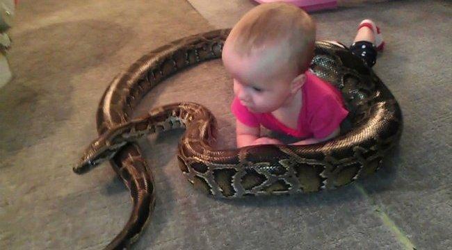 Sokkoló: óriáskígyóval játszik a csecsemő – videóval