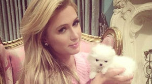 Luxus: dadust fogad kutyái mellé Paris Hilton