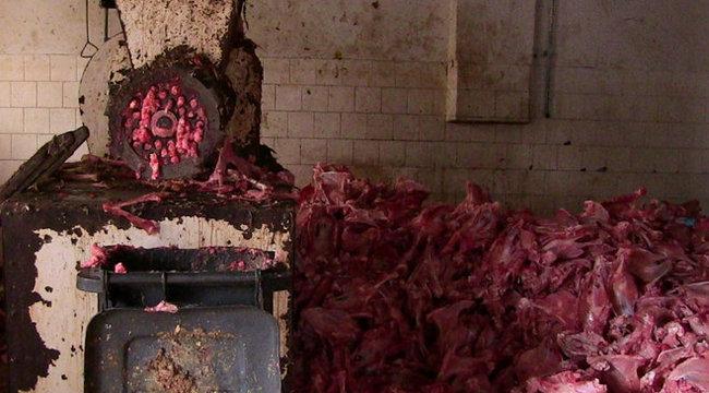 Gigabírságra számíthat a vágóhídi hulladékfeldolgozó