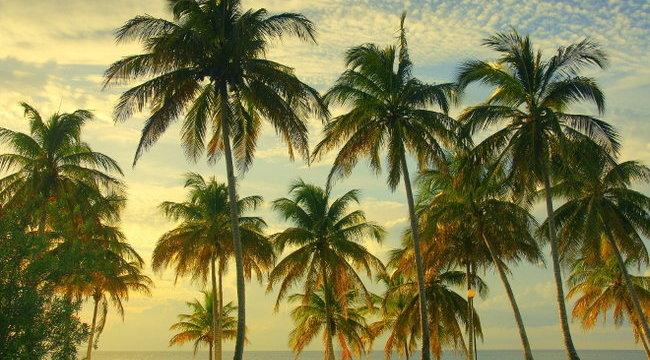 Norbival utazik Kubába a Rising Star Palmirája