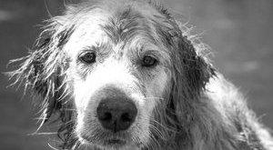 A svájciak is esznek kutyát – például füstölve