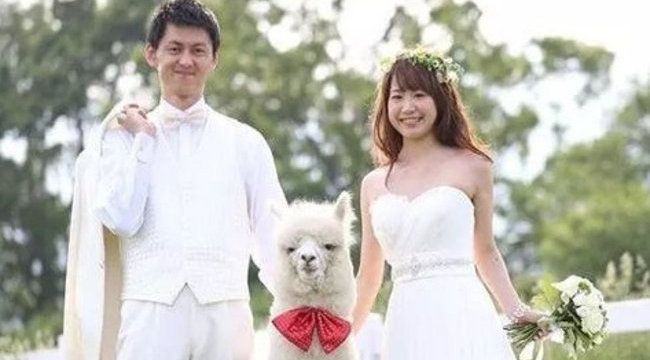Fehér, de nem tud írni az új menő esküvői tanú