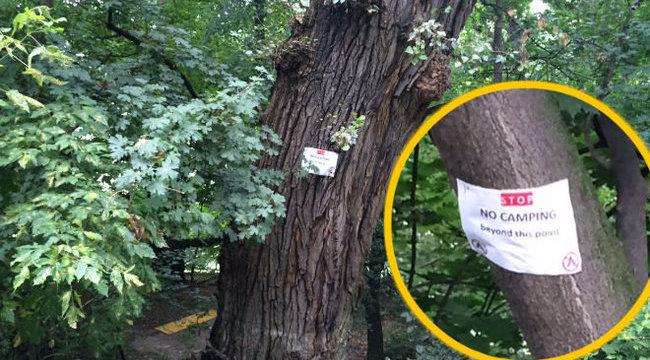 Halál a Szigeten: rádőlt egy fa egy tinire