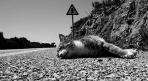 Borzalmas dolgot tett a cicával a kanizsai ámokfutó