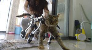 Kerekesszéket épített beteg macskájának