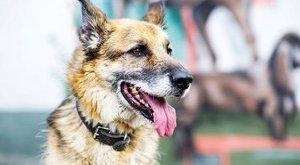 Mentsen életet: 120 kutya vár gazdára