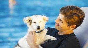 Pólósok segítenek az árva kutyákon – videó