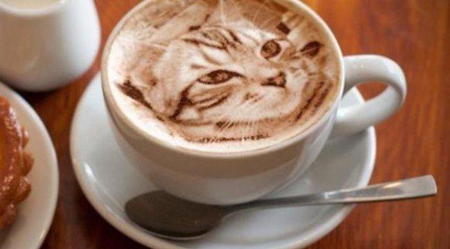 Most ugrik a macska a kávéba - fotók
