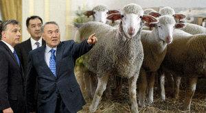 Kazah juhokért fizetett milliókat a minisztérium