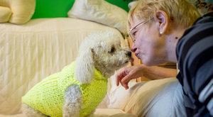 Cukiság: árva kutyákat öltöztet Rózsa