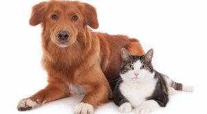 Ennyivel jobban szeret a kutya, mint a macska