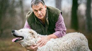 A rendőrség nem tudott Orbán megvert kutyájáról