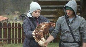 Veszélyben vannak a Farm állatai a béna lakóktól?