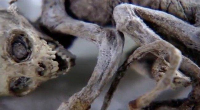 Rejtély, mi lehet ez a hátborzongató lény – videó