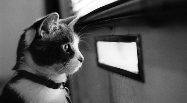Az ajtó mögötti rém tartja rettegésben a postást