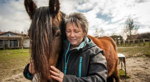 Halálból visszatért lovakért küzd Vavyan Fable