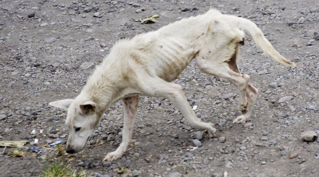 Gyilkosokká válhatnak felnőttként az állatkínzó gyerekek