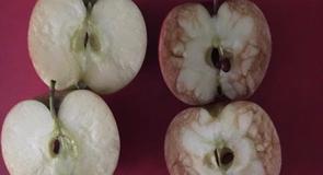 Almával ilyen szépen még nem szemléltettek semmit
