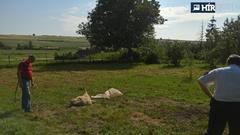 Embertelen – megkínoztak és lefejeztek egy birkát Nógrádban