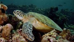 Majdnem belehalt a szelfikbe a teknős