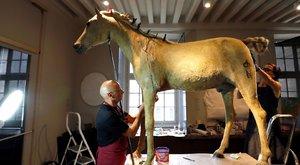 Ráncba szedik Napóleon leghíresebb lovát