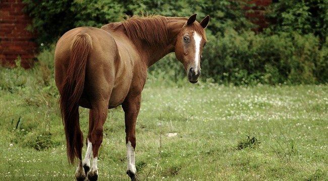 Lányok kapták rajta a lóval szexelő srácot