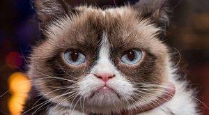 Londonban finnyázott a morcos macska