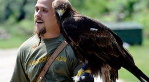 Ragadozó madarakkal él Dániel