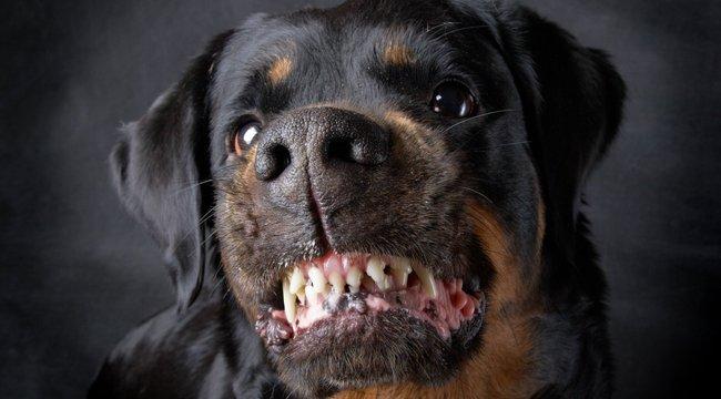 Zsófi: csak nézte, ahogy széttépik a kutyámat!