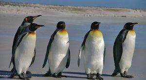 Pingvingondozót keres a fővárosi állatkert