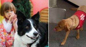 Kutyája mentette meg a kétévest a gyilkos kórtól